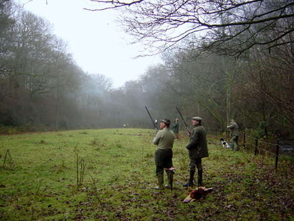 A Pheasant Shoot